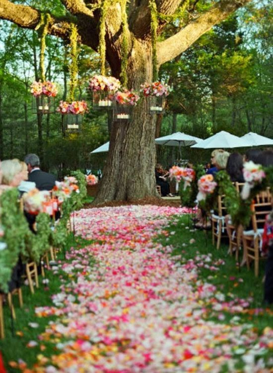 wedding season and confetti pathway